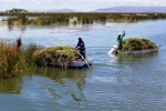 Gathering Reeds.  Uros Islands.